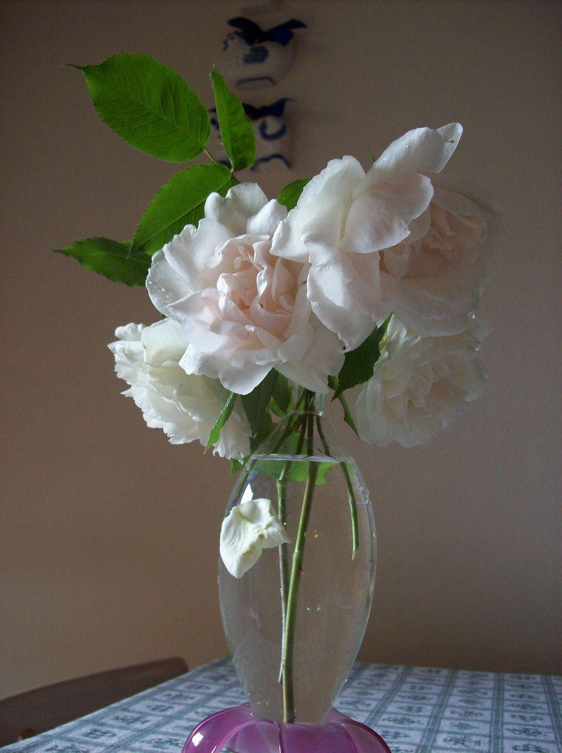 Le rose di Marzia